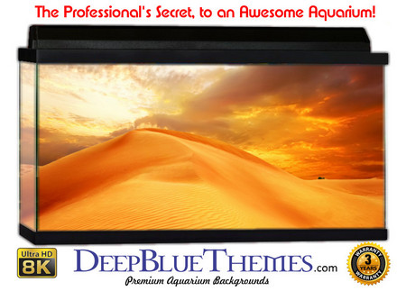 Buy Aquarium Background Desert Golden Aquarium Background