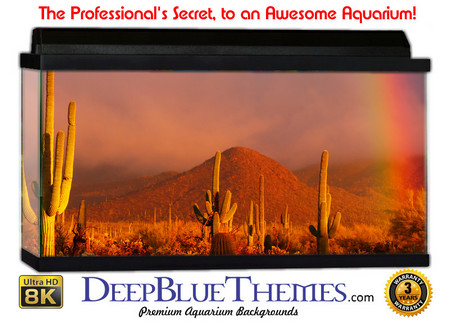 Buy Aquarium Background Desert Rainbow Aquarium Background