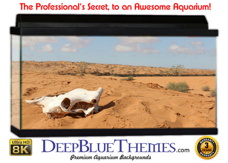 Buy Aquarium Background Desert Skull Aquarium Background