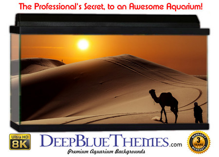 Buy Aquarium Background Desert Travel Aquarium Background