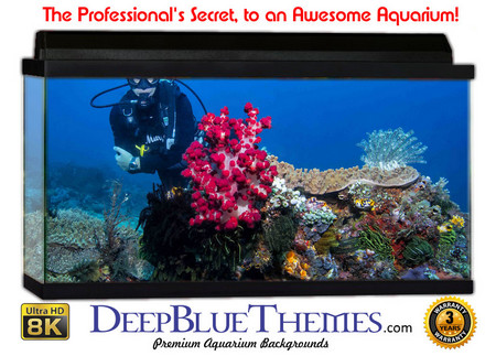 Buy Aquarium Background Divers Coral Aquarium Background