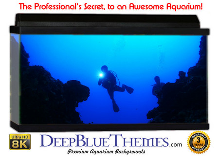 Buy Aquarium Background Divers Enter Aquarium Background