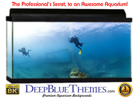Buy Aquarium Background Divers Explore Aquarium Background