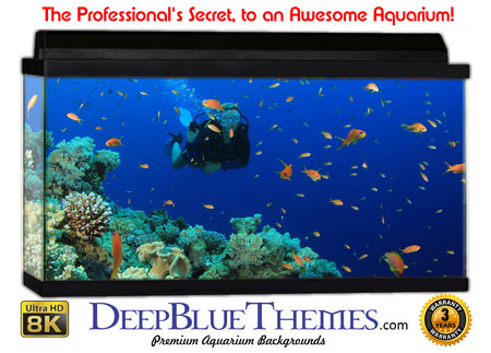 Buy Aquarium Background Divers Fish Aquarium Background