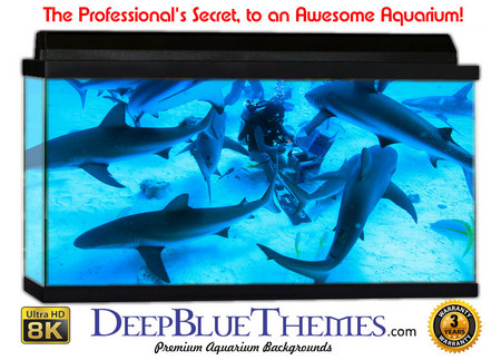 Buy Aquarium Background Divers Frenzy Aquarium Background