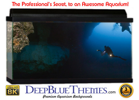 Buy Aquarium Background Divers Hole Aquarium Background