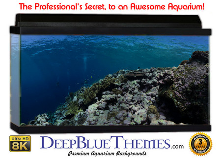 Buy Aquarium Background Divers Pan Aquarium Background