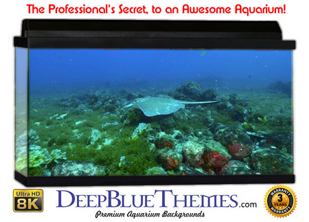 Buy Aquarium Background Divers Scene Aquarium Background