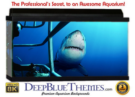 Buy Aquarium Background Divers Shark Aquarium Background