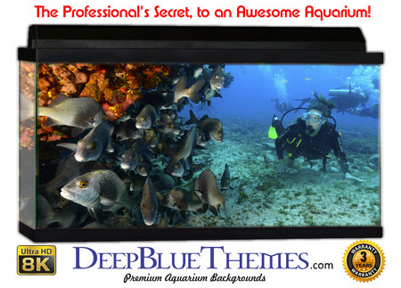 Buy Aquarium Background Divers Wall Aquarium Background