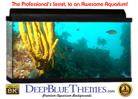 Buy Aquarium Background Favorite Coral Aquarium Background