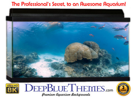 Buy Aquarium Background Favorite Dream Aquarium Background