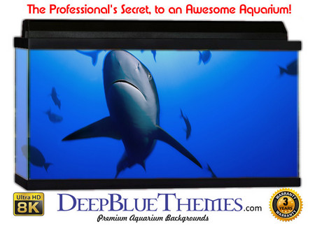 Buy Aquarium Background Favorite Shark Aquarium Background