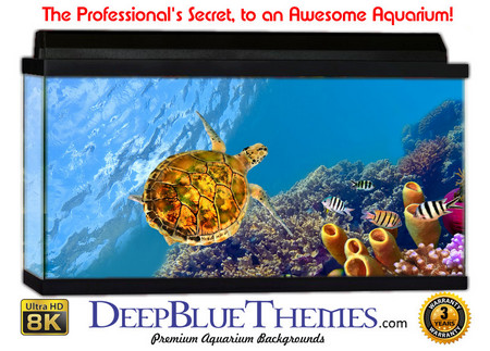 Buy Aquarium Background Favorite Turtle Aquarium Background