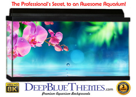 Buy Aquarium Background Garden Flower Aquarium Background
