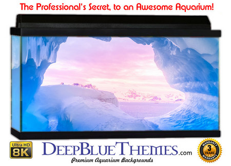 Buy Aquarium Background Ice Heaven Aquarium Background