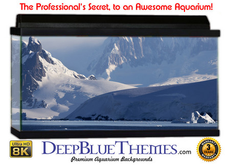 Buy Aquarium Background Ice Landscape Aquarium Background