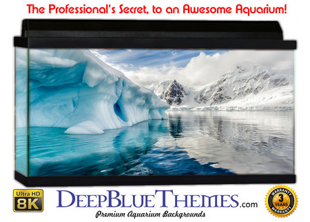Buy Aquarium Background Ice Portrait Aquarium Background