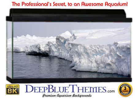 Buy Aquarium Background Ice Shelf Aquarium Background