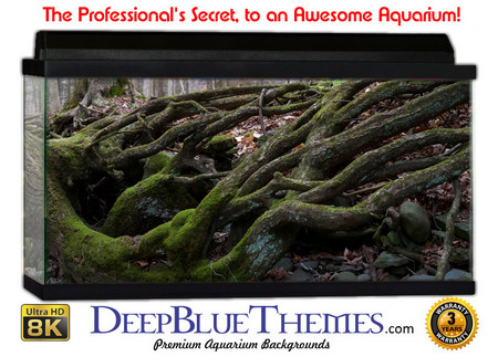 Buy Aquarium Background Nature Roots Aquarium Background