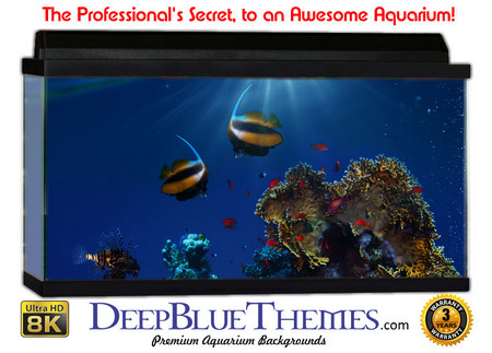Buy Aquarium Background Reef Beach Aquarium Background