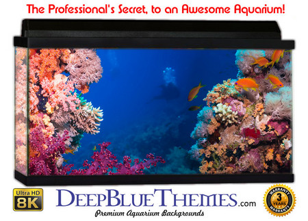 Buy Aquarium Background Reef Beautiful Aquarium Background