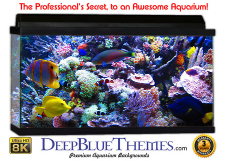 Buy Aquarium Background Reef Busy Aquarium Background