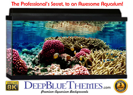 Buy Aquarium Background Reef Colors Aquarium Background