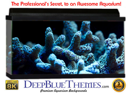 Buy Aquarium Background Reef Coral Aquarium Background