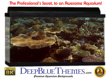 Buy Aquarium Background Reef Garden Aquarium Background