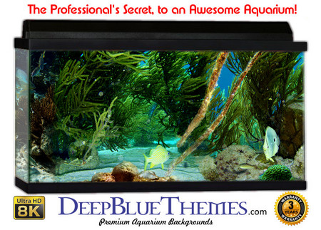 Buy Aquarium Background Reef Green Aquarium Background