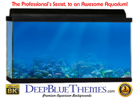 Buy Aquarium Background Reef Light Aquarium Background