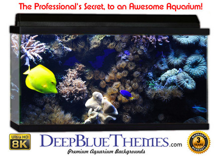 Buy Aquarium Background Reef Scene Aquarium Background
