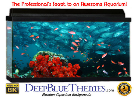 Buy Aquarium Background Reef School Aquarium Background