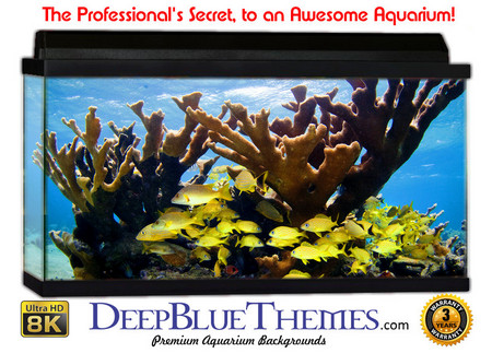 Buy Aquarium Background Reef Simple Aquarium Background