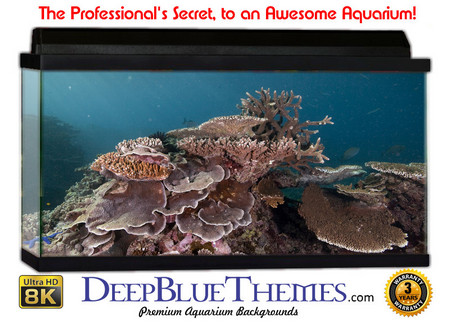 Buy Aquarium Background Reef Spread Aquarium Background