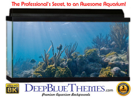 Buy Aquarium Background Reef Sun Aquarium Background
