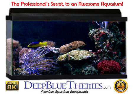 Buy Aquarium Background Reef Turtle Aquarium Background