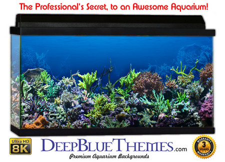 Buy Aquarium Background Reef Under Aquarium Background