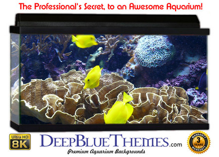 Buy Aquarium Background Reef Yellow Aquarium Background