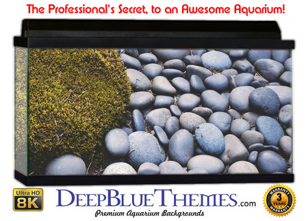 Buy Aquarium Background Rock Stones Aquarium Background