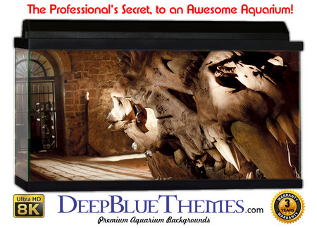 Buy Aquarium Background Ruins Skull Aquarium Background