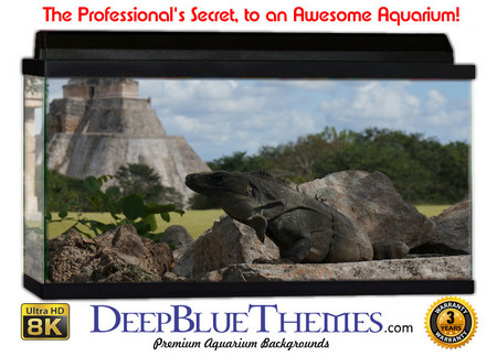 Buy Aquarium Background Ruins Sky Aquarium Background