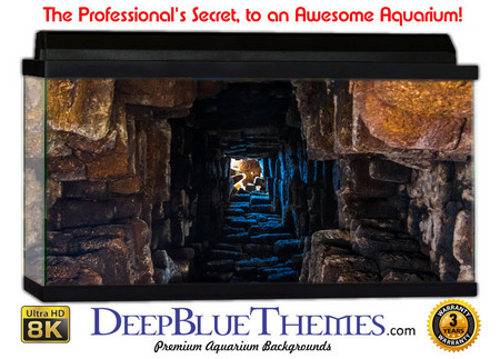 Buy Aquarium Background Ruins Tunnel Aquarium Background