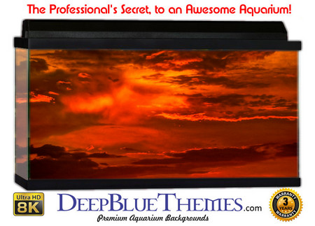 Buy Aquarium Background Sky Fire Aquarium Background