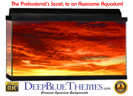 Buy Aquarium Background Sunset Peace Aquarium Background
