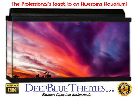Buy Aquarium Background Sunset Purple Aquarium Background