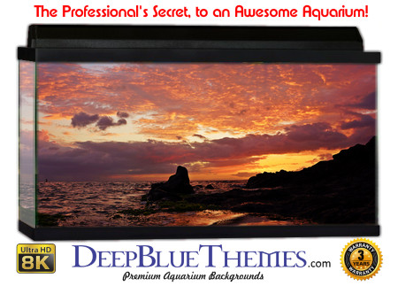 Buy Aquarium Background Sunset Rock Aquarium Background