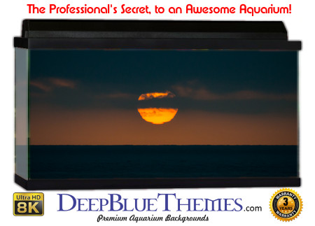 Buy Aquarium Background Sunset Sun Aquarium Background