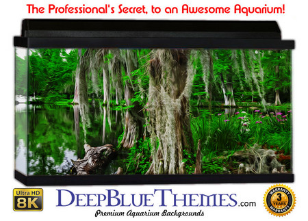 Buy Aquarium Background Swamp Deep Aquarium Background